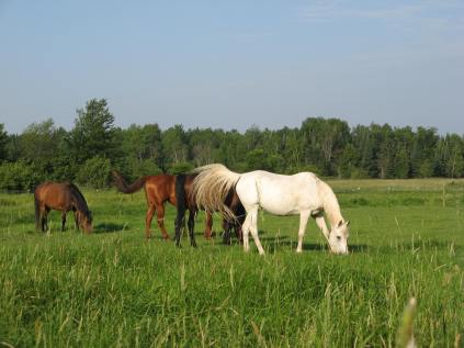 Rain brings lush grass and biting insects to a horse's life.