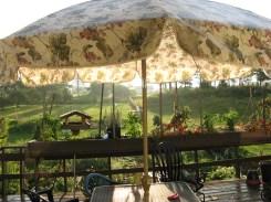 DeckumbrellaSept12013 001