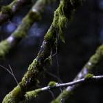 Vosges, Vogezen, bergen, frankrijk, natuurfotografie, reisfotografie, jeanine verbraak