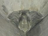 Luc représenté par un taureau