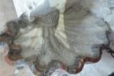 Chapelle de Belvezet-bénitier en forme de coquille