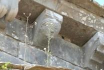 Modillons décorés
