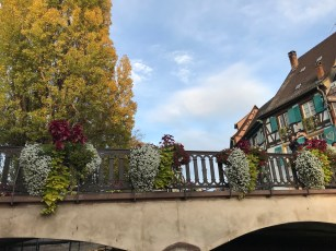 scene from the boat tour in Colmar - from under the bridge