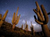 AZ Saguaro at night 1