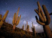 AZ Saguaro at night 1