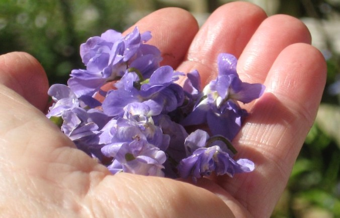A pugil of Violets – photo by JeanneRose2019