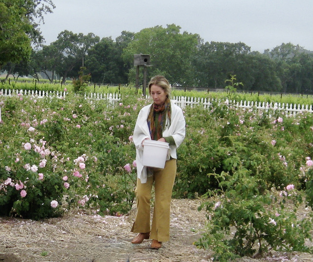 Marianne Griffeth of PrimaFleur.com in a field of Roses, 2009. Photo by Jeanne Rose