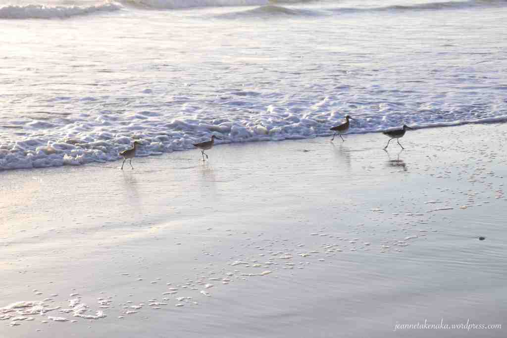 Sandpipers running from waves rolling onto shore