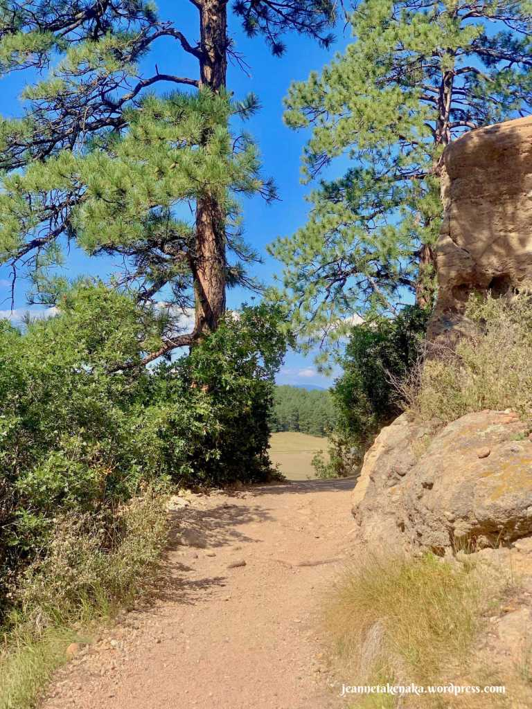 A dirt path leads between pine trees, a reminder that as we walk forward, we can trust God to provide our needs