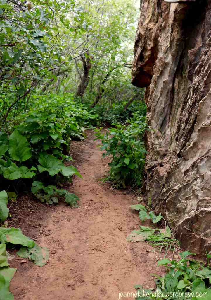 A closed in path with rocks on one side, a reminder that pursuing dreams often has obstacles