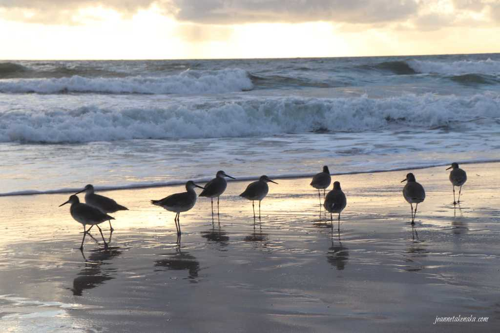 A group of birds, a reminder that sometimes we allow others to dictate what we say yes to