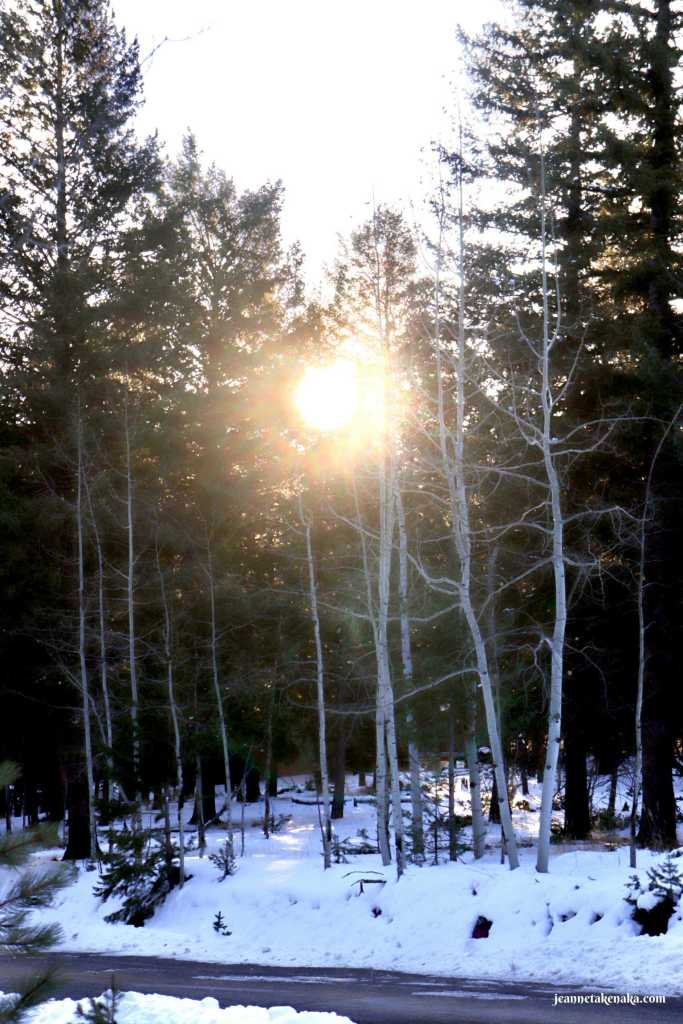 Sunlight shining through bare trees, reminding us we can shine our lights in the face of fear
