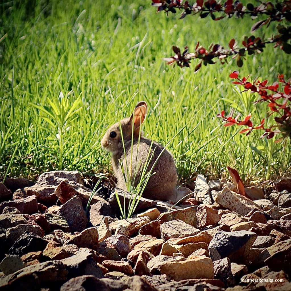 A baby bunny all alone