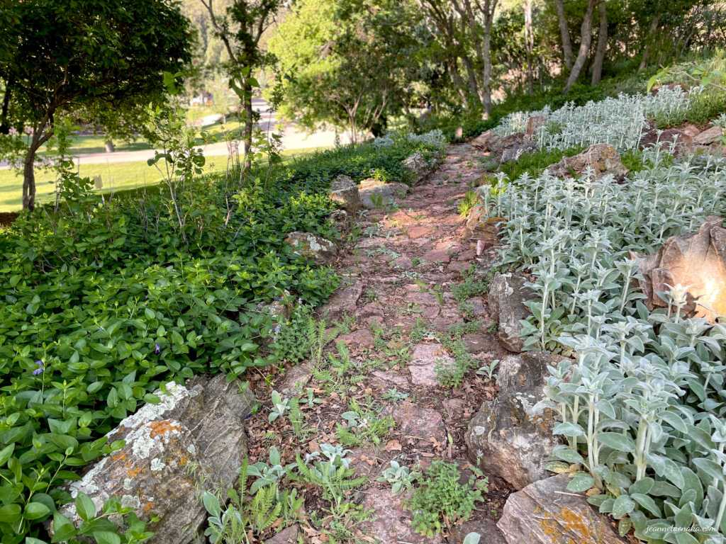 A greenery-lined path, a reminder that we have to choose which way we'll walk in stressful times