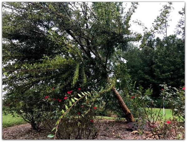 Softened Soil & Hearts — We Interrupt These Blog Posts to Bring You A Hurricane via www.jeanwilund.com