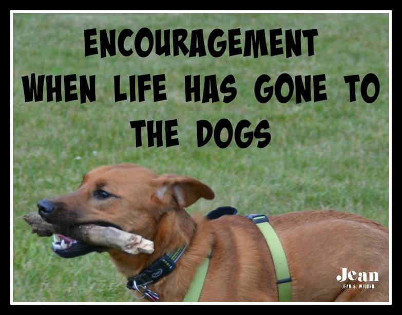 """Need Encouragement When Life Has Gone to the Dogs? Visit Me at """"Inspire A Fire"""" Today"""