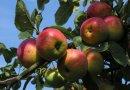 Een gratis appel of perenboom voor alle inwoners Zuidplas tijdens de Week van het Water