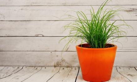 Connaissez-vous les services de livraison de plantes en ligne ?