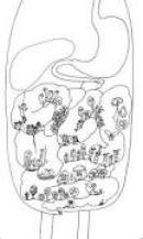 bacteries_intestinales