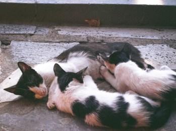 MORSKIPOSTJedanfrajeribidermajermorejedrenjeseagreececats.jpg