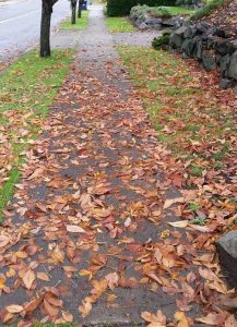 Autumn leaves all over the yard and sidewalk