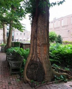 Tree with cool roots, foliage and brickwork in Philadelphia park
