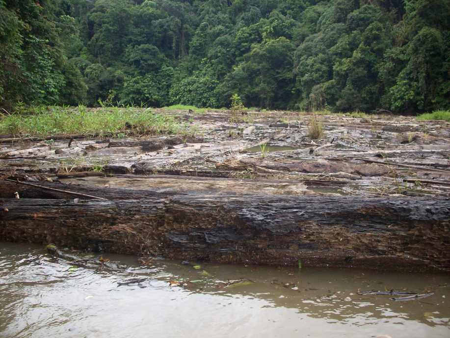 Logs blocking the river, they stretch across the whole current and about 200 meters down.