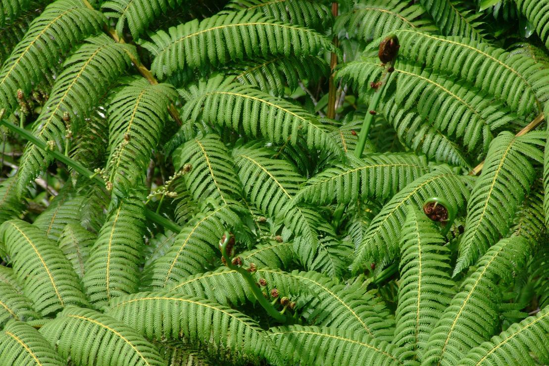 top of a tree fern