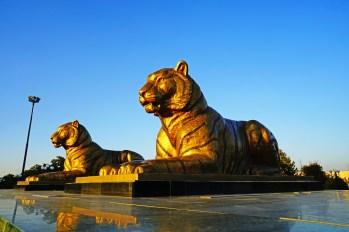 Samarkanda - Lwy Registanu