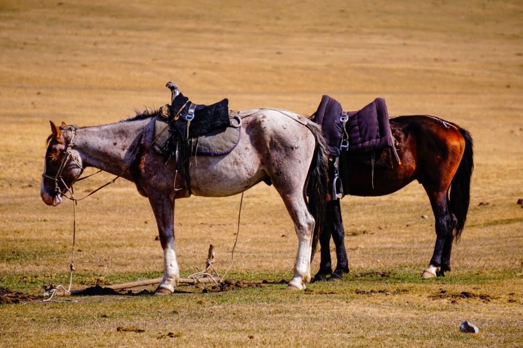 Kirgistan - konie