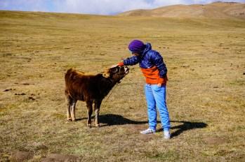 Kirgistan - zdjęcia (14)