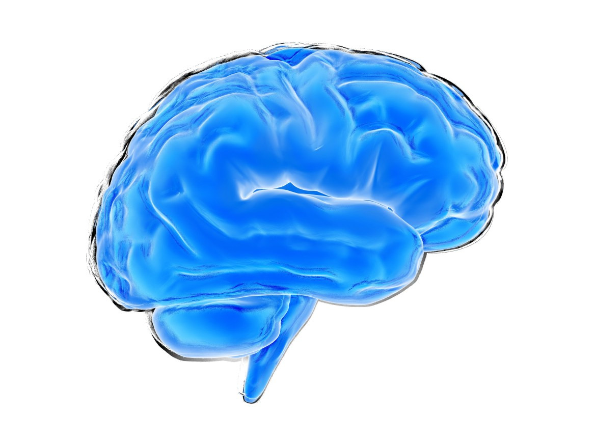 Blue brain illustration