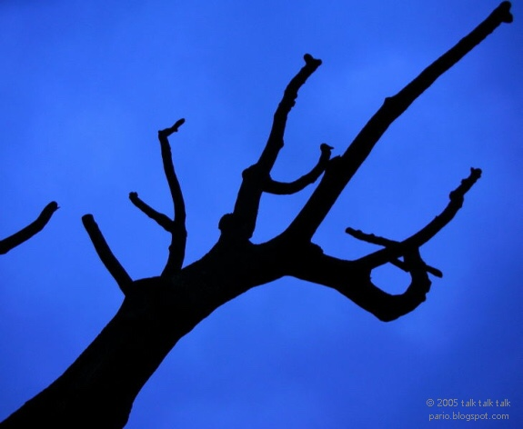 Dead tree against blue sky