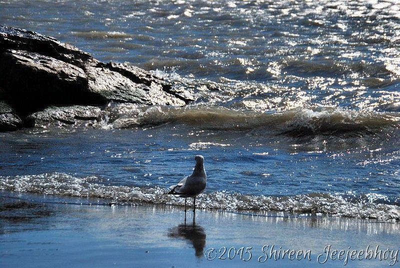 Gull at Woodbine Beach on Lake Ontario shore