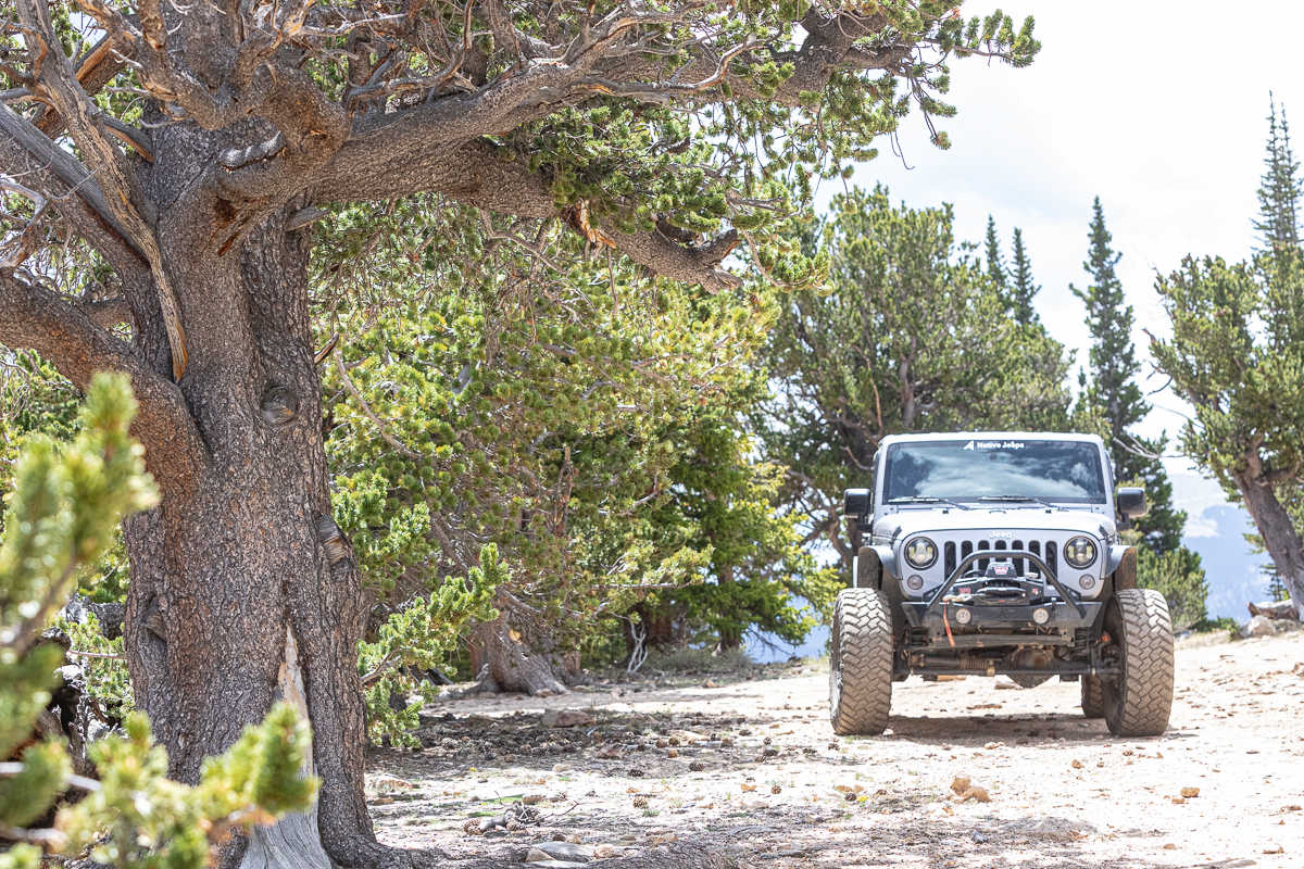 Jeep Tours Colorado Native Jeeps Old Trees