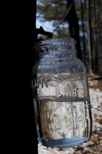 A clear mason jar shows how pure the sap is when it comes out of the tree