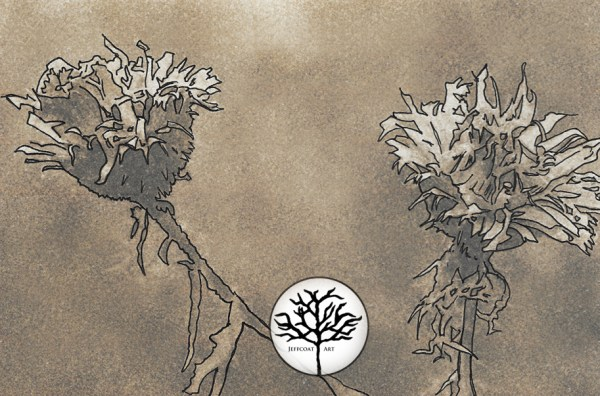 sepia inking of flowers by Jeffcoat Art