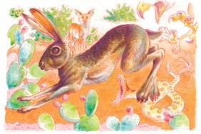 Jack Rabbit by Jeff Crosby