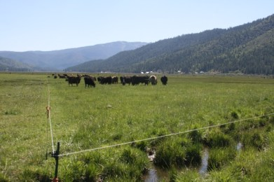 holistic planned grazing, Gallagher fencing
