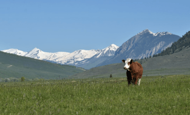 Country Natural Beef, Grazing for Change Sponsor, Holistic Management, Savory Global Network, Regenerative Agriculture