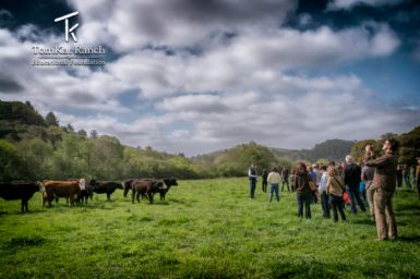 TomKat Ranch Educational Foundation, Grazing for Change Sponsor, Holistic Management, Savory Global Network