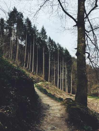 Sloping Treeline