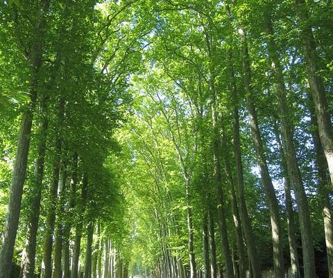 Day 4 in Paris: Versailles