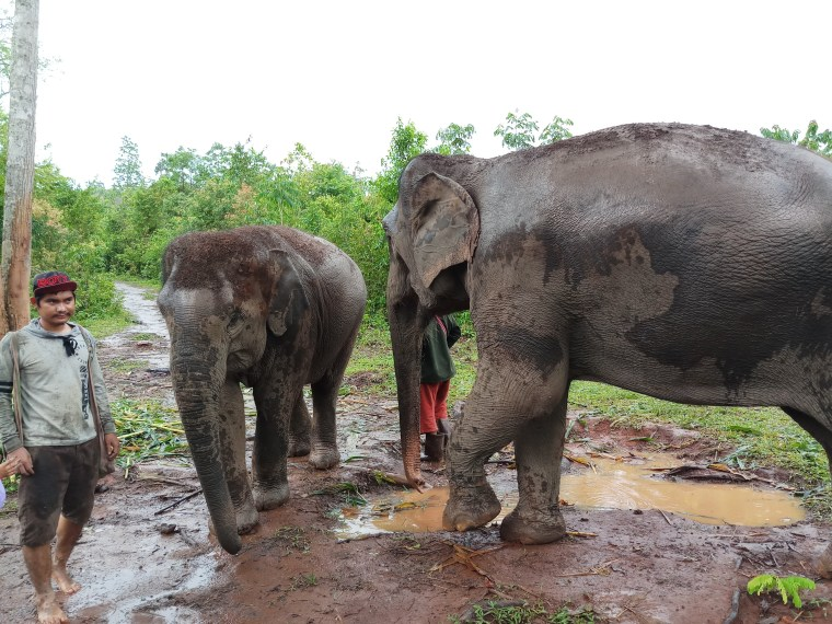 This image has an empty alt attribute; its file name is elephants-3.jpg