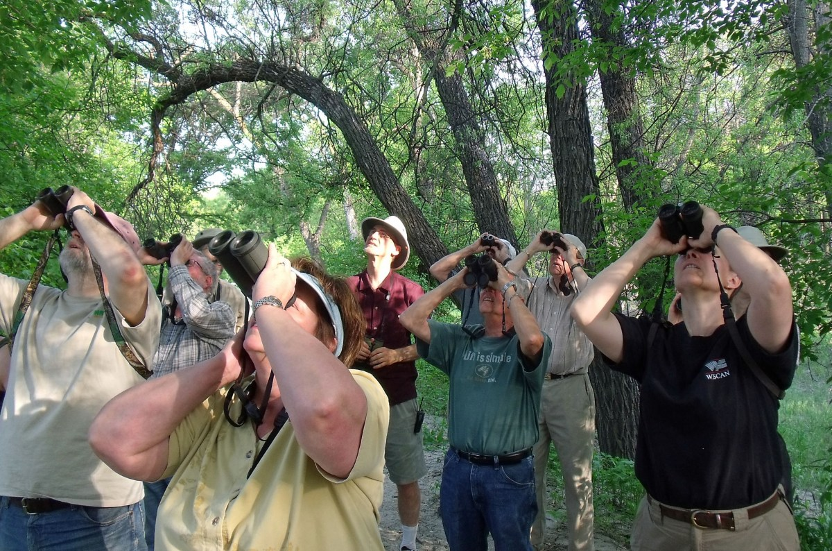 A group of people in the forest all looking up with binoculars