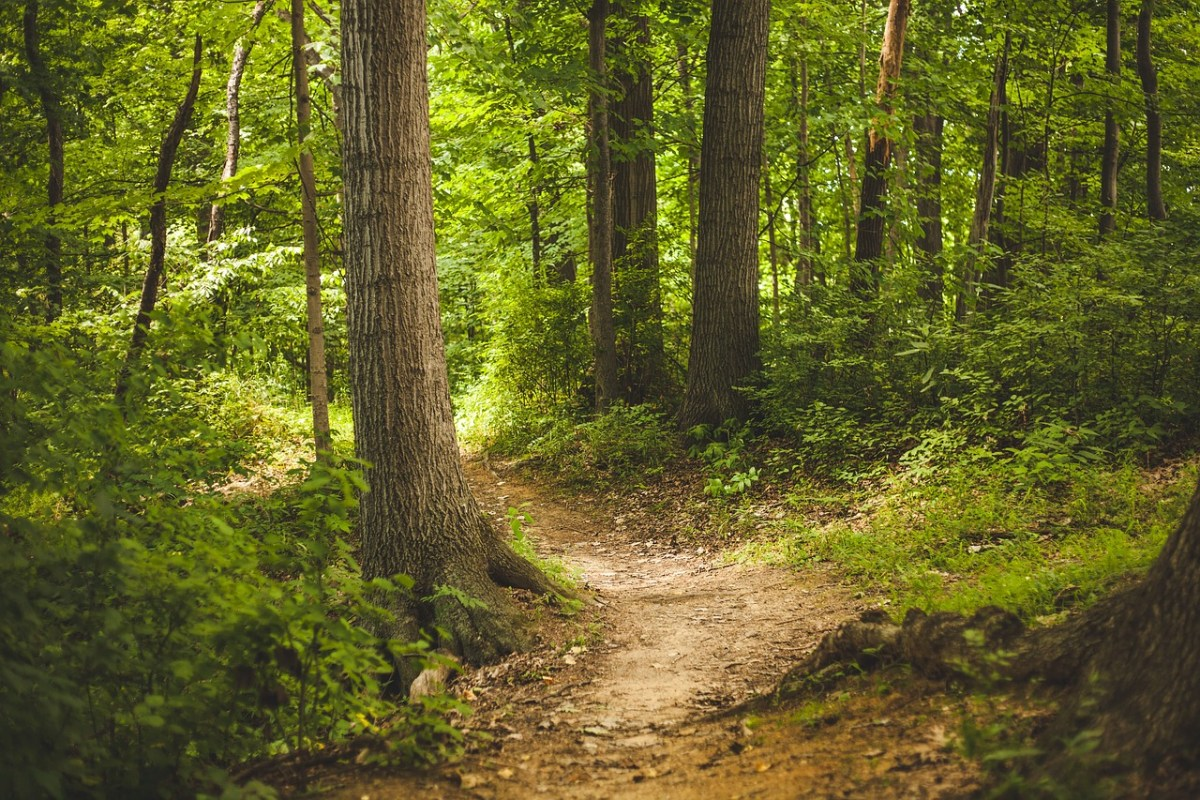 A sun-light forest with winding dirt pathway