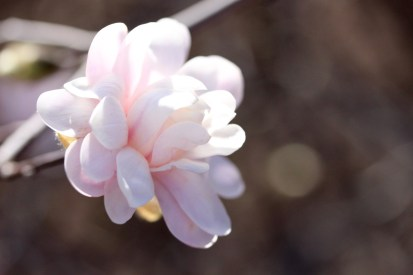 frost-buds-2