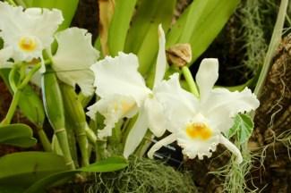 orchids17-1