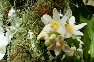 orchids17-2