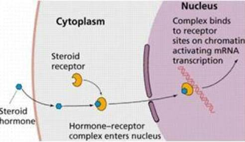 Hormone_Receptor